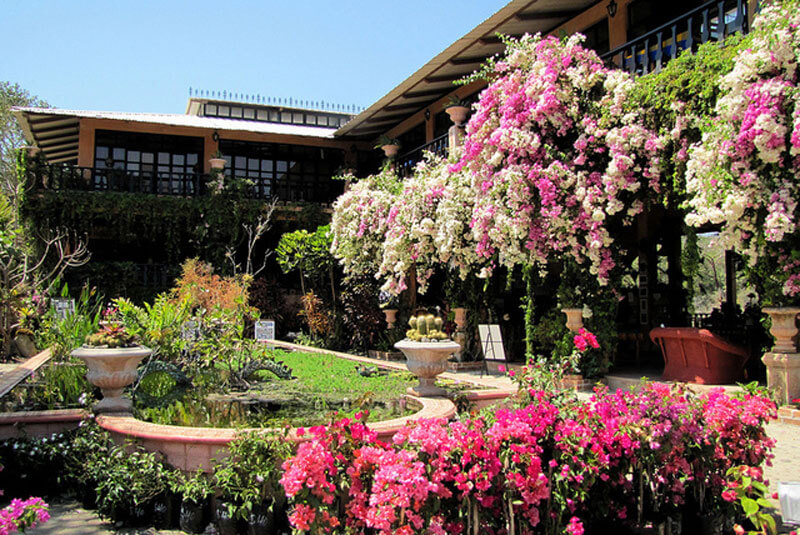 Genial Celebrating The Vallarta Botanical Gardens